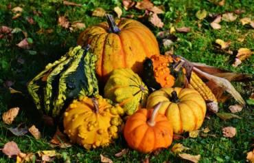 Les reines de l'automne !!
